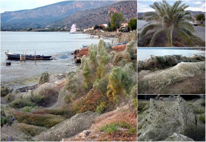 300-метровая паутина вдоль береговой линии в Греции
