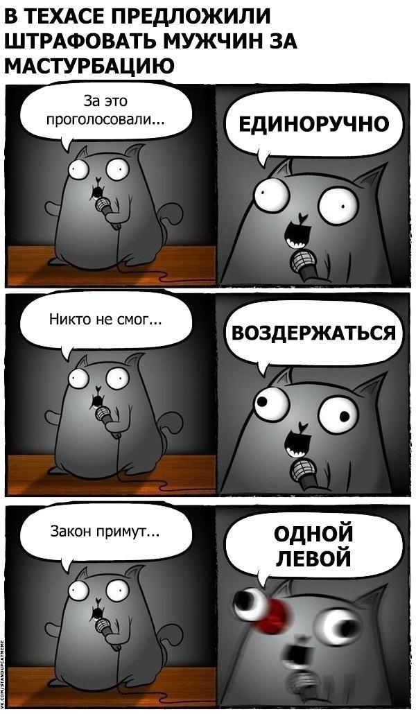 Подборка юмора и шуток от стендап-кота