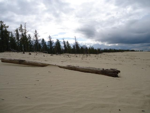 Куда подевался лес?