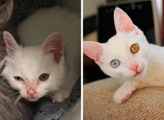 Животные, которые нуждались в помощи человека: до и после