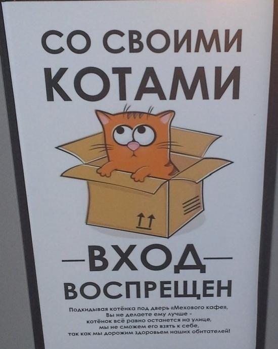 Кафе для любителей котиков в Калуге