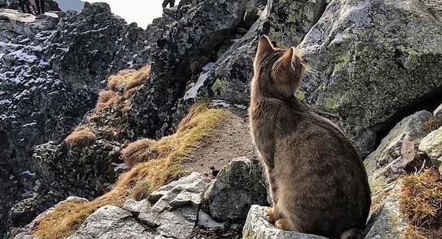 Неожиданная встреча на вершине горы Рысы в Польше