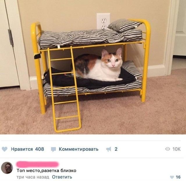 Юмор и шутки из социальных сетей