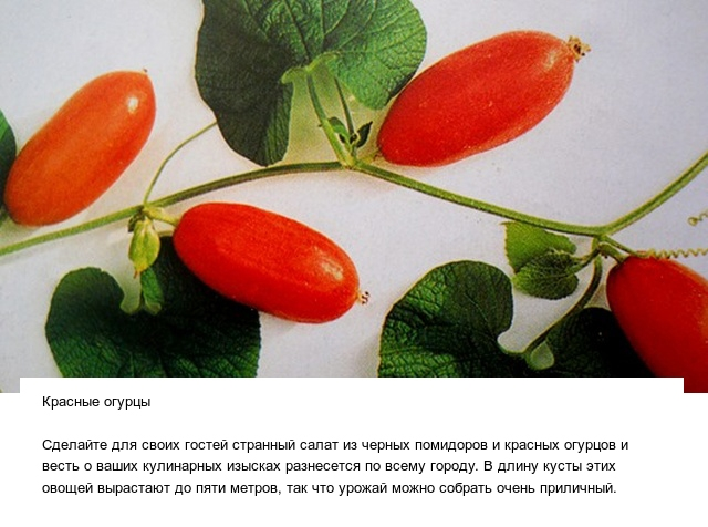 Странные овощи и необычные плоды, которые вас точно удивят