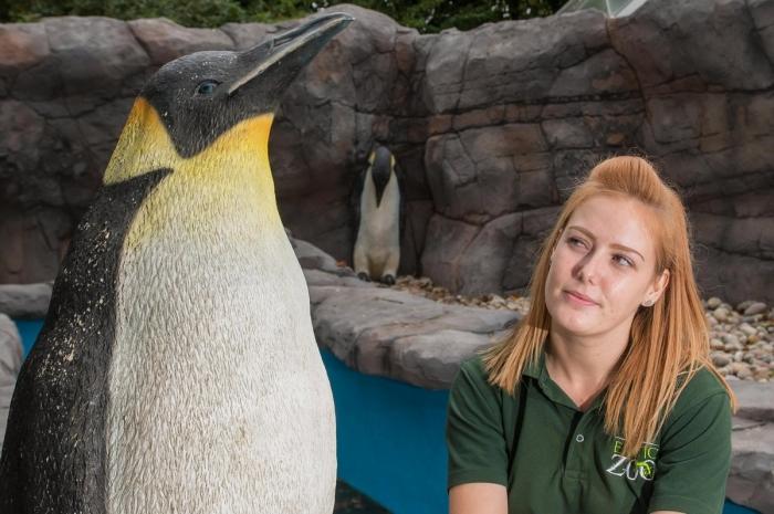 Британский зоопарк заселил новый пингвинарий пластиковыми птицами