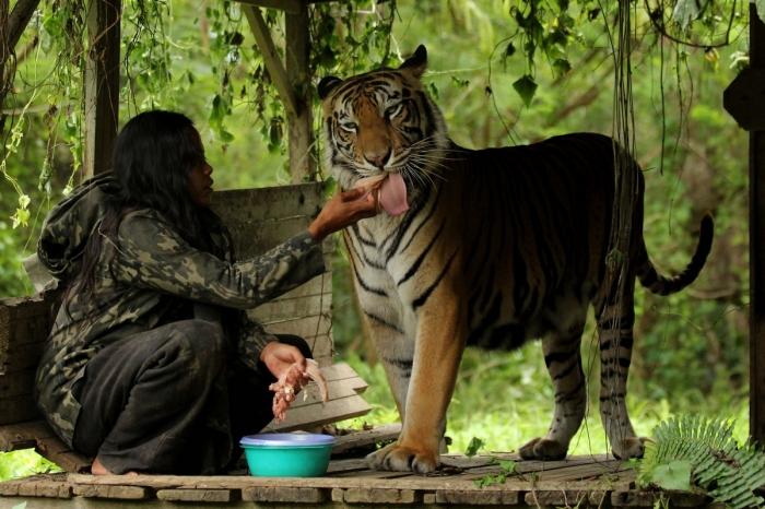 Индонезийская учительница 10 лет живет с тигрицей