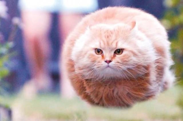 Забавные фото и мемы с животными превращаются в скульптуры