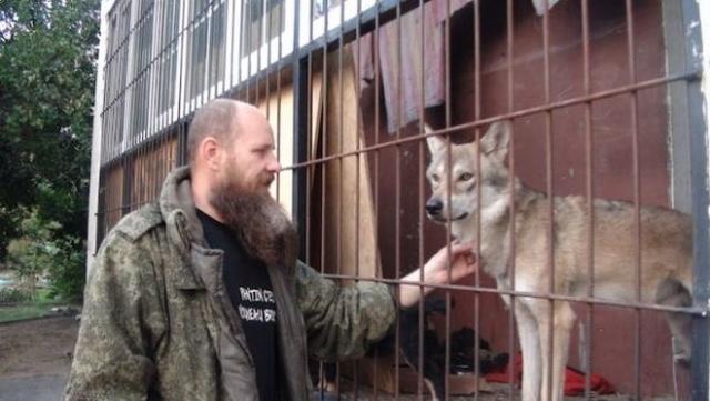 Житель Волгограда держит настоящего волка в качестве домашнего питомца