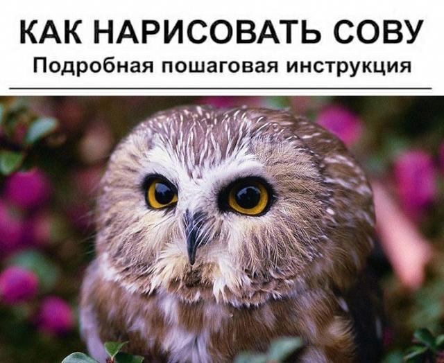 """Необычная инструкция: как """"правильно"""" рисовать сову"""