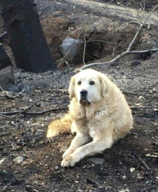 Пес по кличке Мэдисон почти месяц ждал хозяев у сгоревшего дома в городе Парадайс
