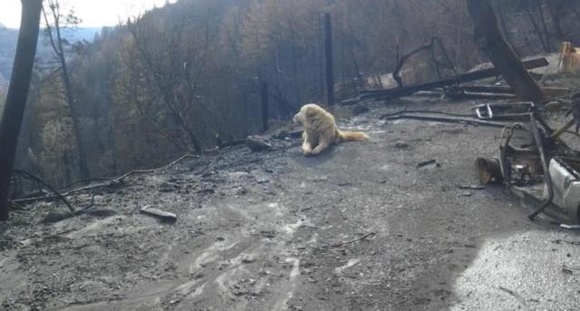 Пес по кличке Мэдисон почти месяц ждал хозяев у сгоревшего дома в городе Па ...