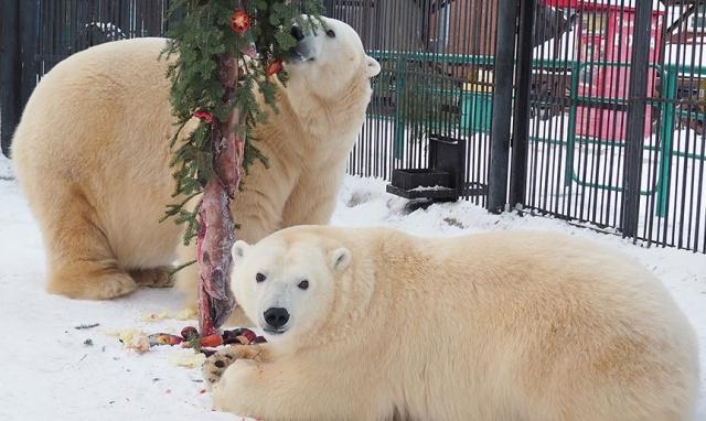 Новогоднее настроение в красноярском зоопарке