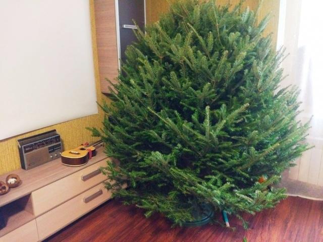 Житель Урала закупил у Ильи Варламова новогодние ёлки на 1,5 миллиона рублей, но бизнес провалился
