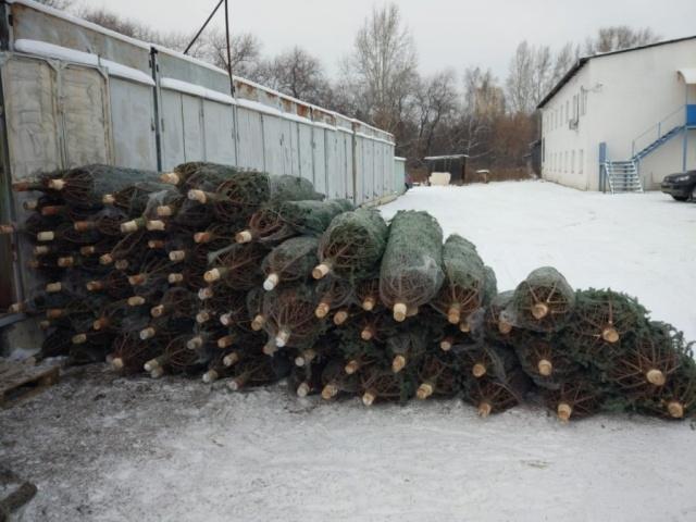 Житель Урала закупил у Ильи Варламова новогодние ёлки на 1,5 миллиона рубле ...