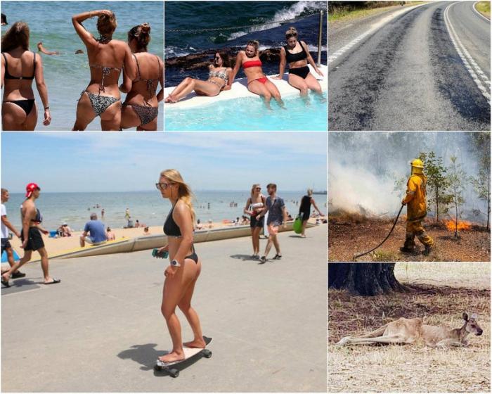 Дороги плавятся, а животные гибнут: самая сильная за последние 80 лет жара в Австралии