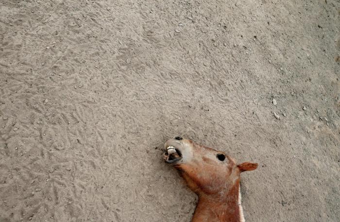 Впервые за 2000 лет высохла Лагуна де Акулео в Чили