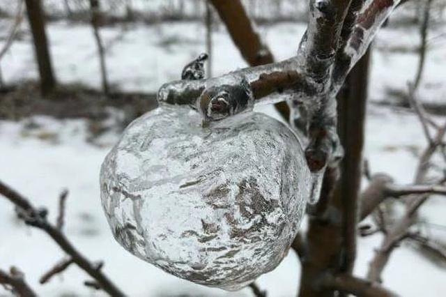 """Необычные """"плоды"""" на фруктовом дереве"""