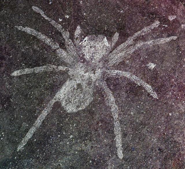 Ученые обнаружили пауков возрастом 110 млн лет со светящимися глазами