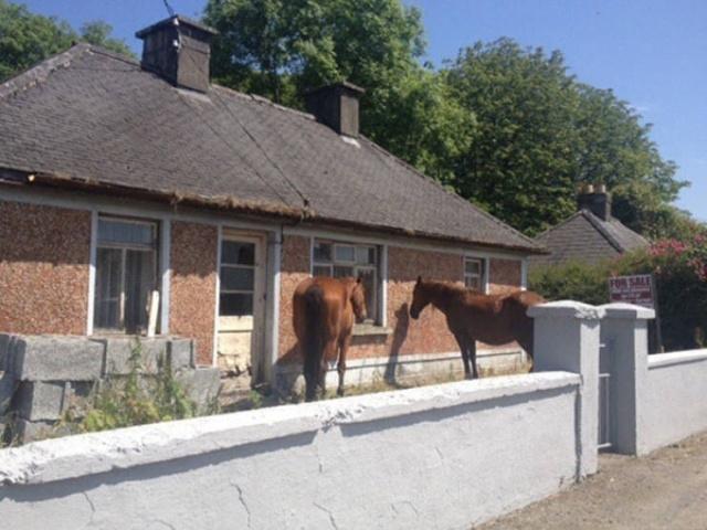 Заброшенные дома и квартиры, выставленные на продажу