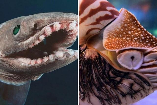 Древние существа, которые живут на нашей планете многие миллионы лет
