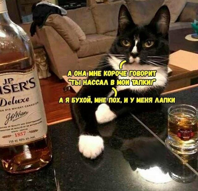 Алкогольный юмор с просторов сети