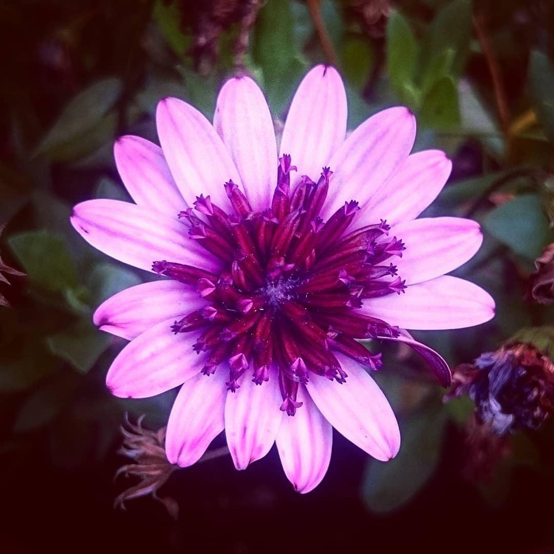 фото цветок игузмис покров день картинки