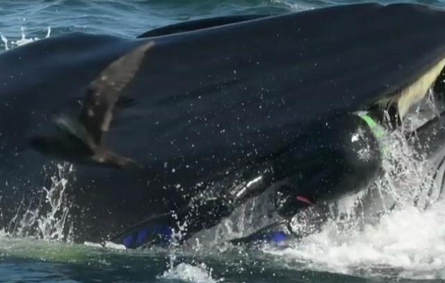"""В ЮАР кит чуть не """"проглотил"""" дайвера"""