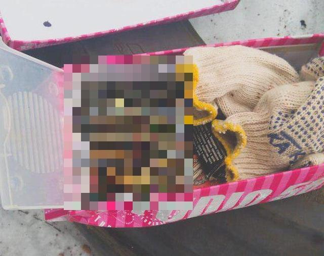 В Подмосковном Раменском дети сделали необычную находку