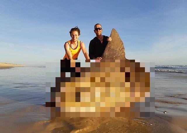 Рыбаки из Австралии обнаружили на мелководье крайне редкую рыбу-солнце