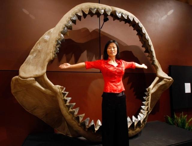 Останки огромной акулы удивили австралийского рыбака