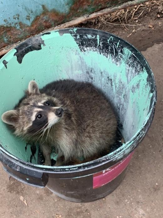 """Необычная """"находка"""" в мусорном контейнере в Москве"""