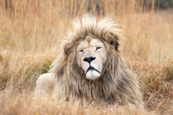 Сдается дом с 70 львами по соседству
