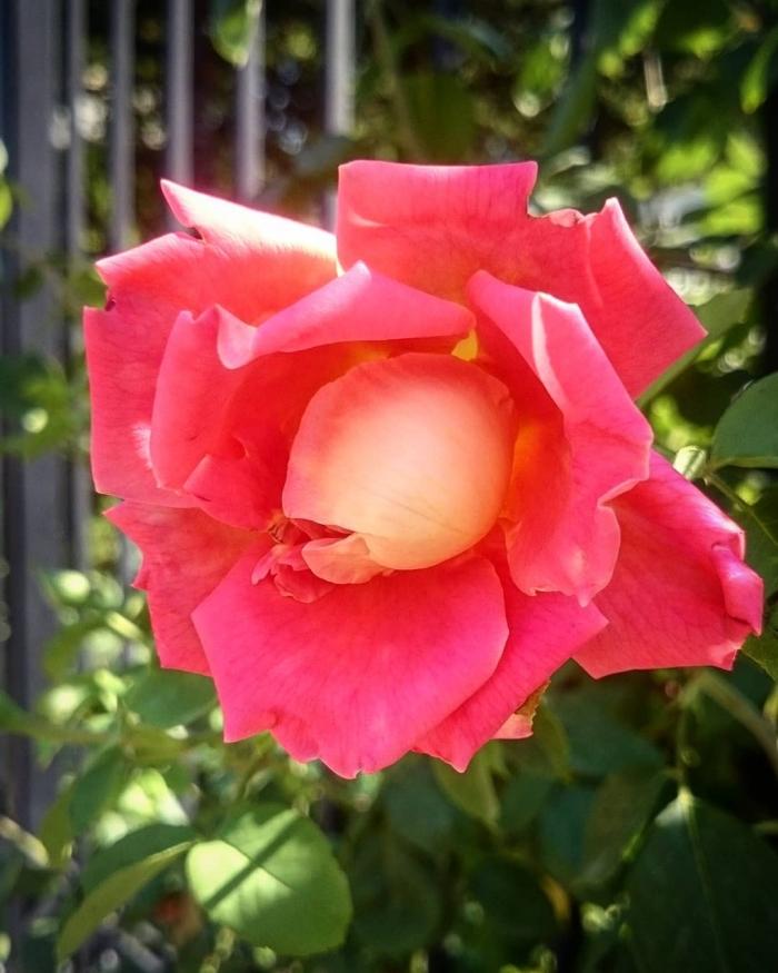 Сказочные фотографии цветов Эртугрула Бекташа