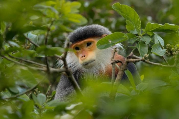 Замечательные фотографии животных Чарльза Райана