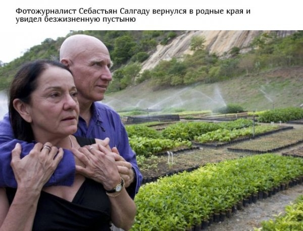 Супруги высадили более 2 миллионов деревьев, превратив пустошь в тропический рай