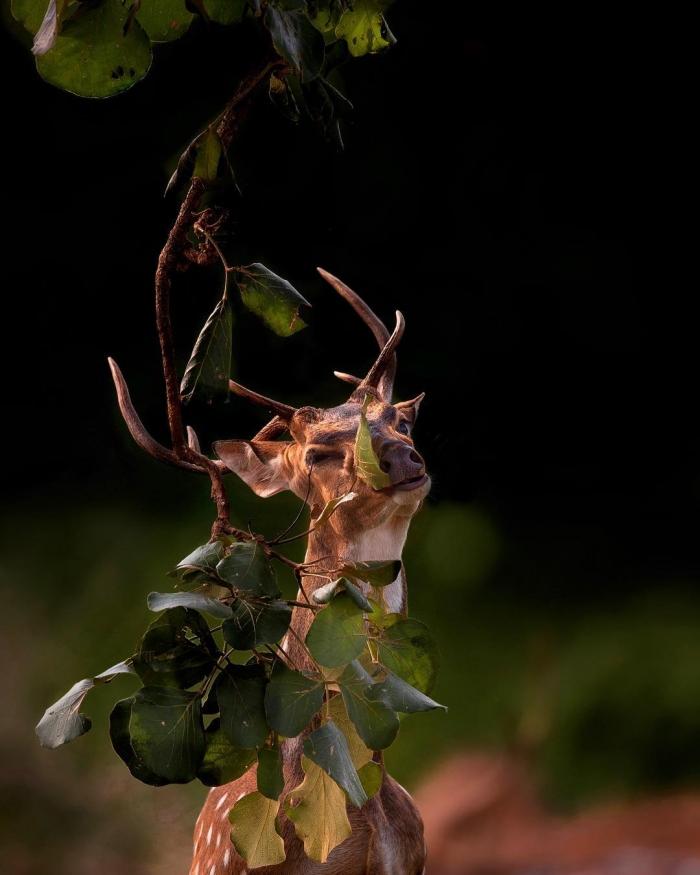 Дикая природа на снимках Варуна Адитья
