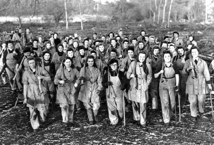 Женщины-дровосеки, валившие лес и вкалывающие на лесопильных заводах во время Второй мировой войны