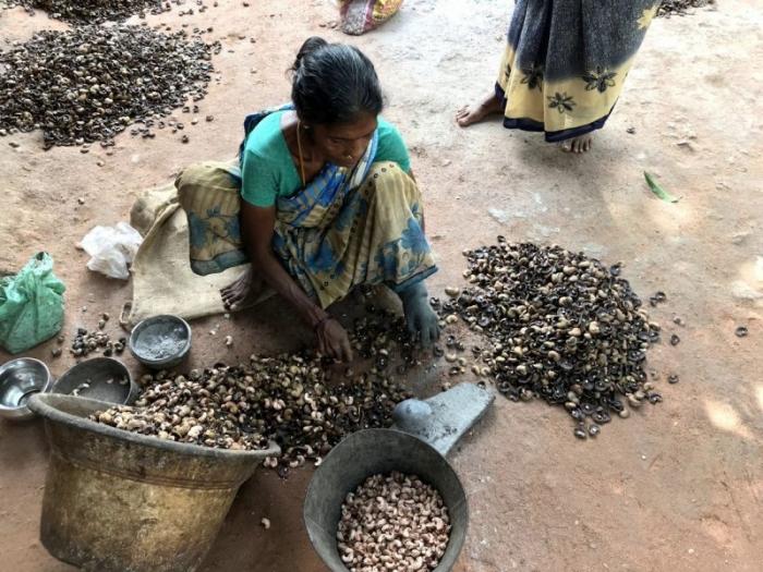 Черные обожженные руки женщин, занятых на обработке кешью