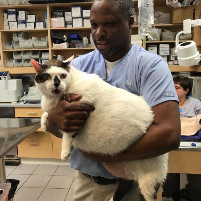 Кот Барсик весом 18 кг ищет хозяев, готовых его прокормить