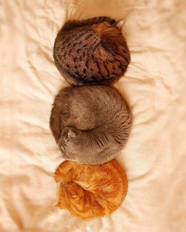 Фото 20 кошек, которые спят в разных позах