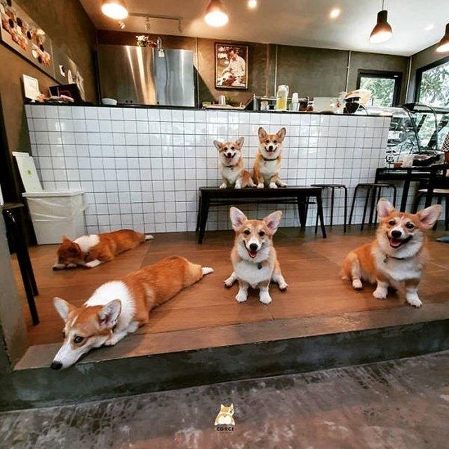 Антистресс-кафе в Таиланде