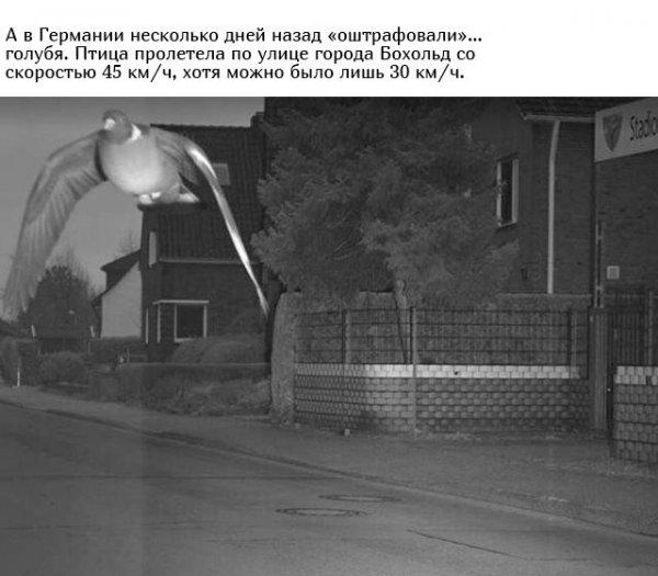 Самые необычные и нелепые штрафы с камер ГИБДД