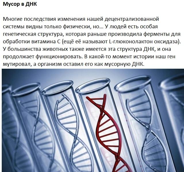 Следы на человеческом теле, оставленные эволюцией