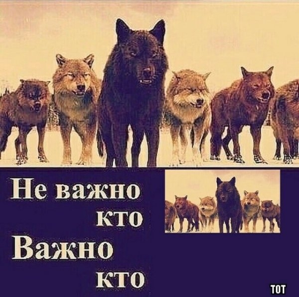 """""""Пацанская народная мудрость"""" и цитаты про волков"""