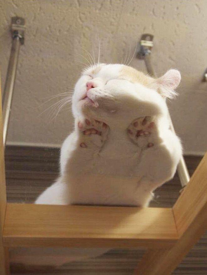 Тающие коты доказательство того, что глобальное потепление - не шуточки