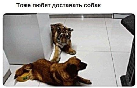 Те же коты, которые просто хотят заниматься обычными кошачьими делами