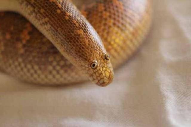 Самая забавная змея