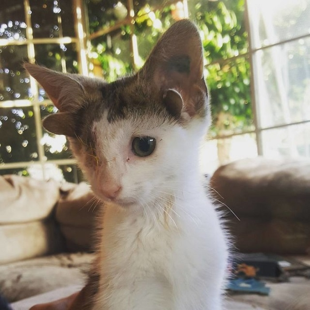 Четырехухий котенок покорил сердца работников приюта