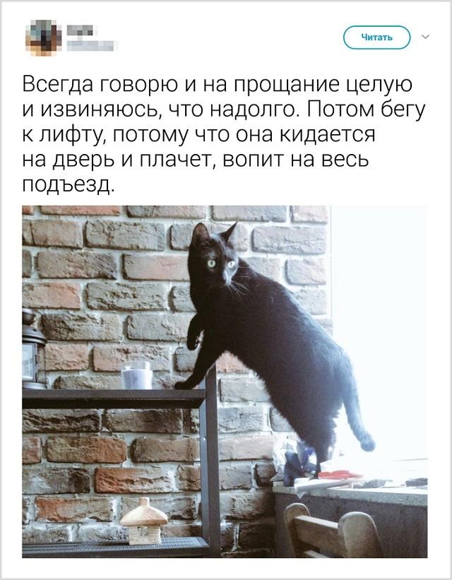 Пользователи рассказали, как они прощаются со своими котиками перед тем, как выйти из дома