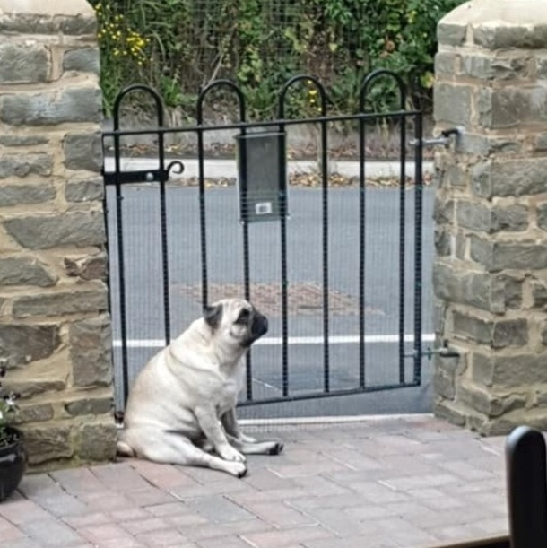 Это Уолтер, и он терпеливо ждет